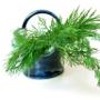 Fresholi Herbal Fusions